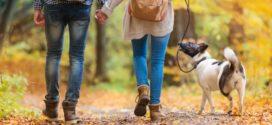 Семь советов для похудения с помощью ходьбы