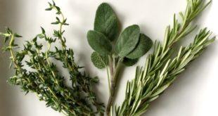 полезные травы и специи